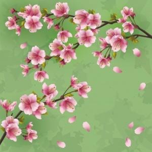 Japanblüten