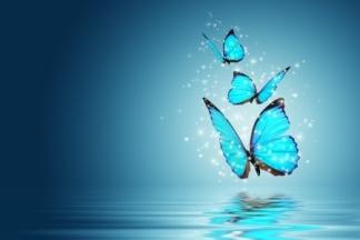 Butterfly_s
