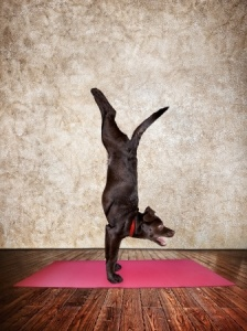 yoga dog_s