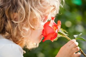 12580798 - child with rose flower in spring garden